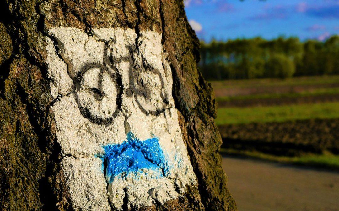 Wyprawy rowerowe po Polsce – szlaki i ścieżki