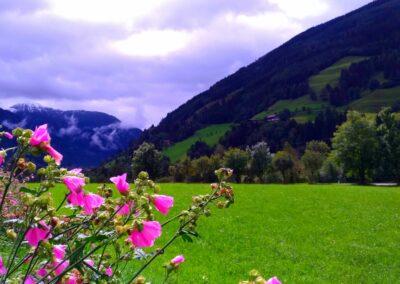 Alpe-Adria - kwiaty na tle gór